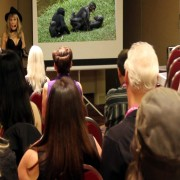 Help Save the Bonobos!