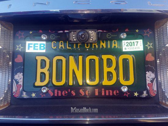 bonobo-license-drsuzy