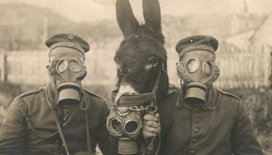 German soldiers and their donkey wearing gas masks.