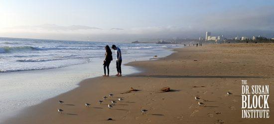 Valentine Couple & Baby Seagulls