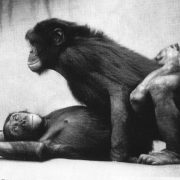 Bonobos Mating Original Photo by Dr. Frans de Waal