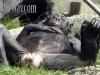 Loretta-bonobo-yoga-a