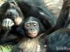 belle-orgy-bonobos_a