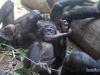 belle_bonobos_a