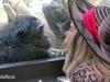 bonobo-kalli_drsuzy_a