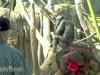 max-suzy-bonobo-loretta2-a