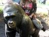 max-suzy_gorilla2_a