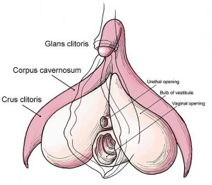 9 Interesting Things You May Not Know About the Clitoris.