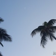 Crescent June Moon