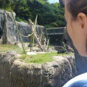 Bonobo Opera Buff