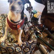 Pedicab Dog caught in a blur