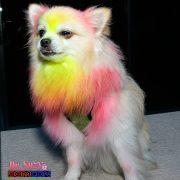 Punk Puppy