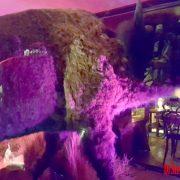 Stuffed Buffalo