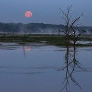 Phoenix's Pink Moon Rising